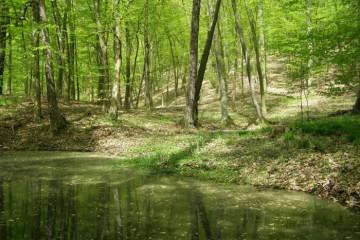 przyroda-gminy-pobiedziska-1