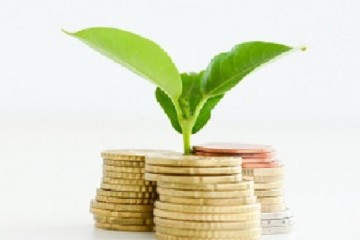 Profitable investment of money concept with isolated plant and c