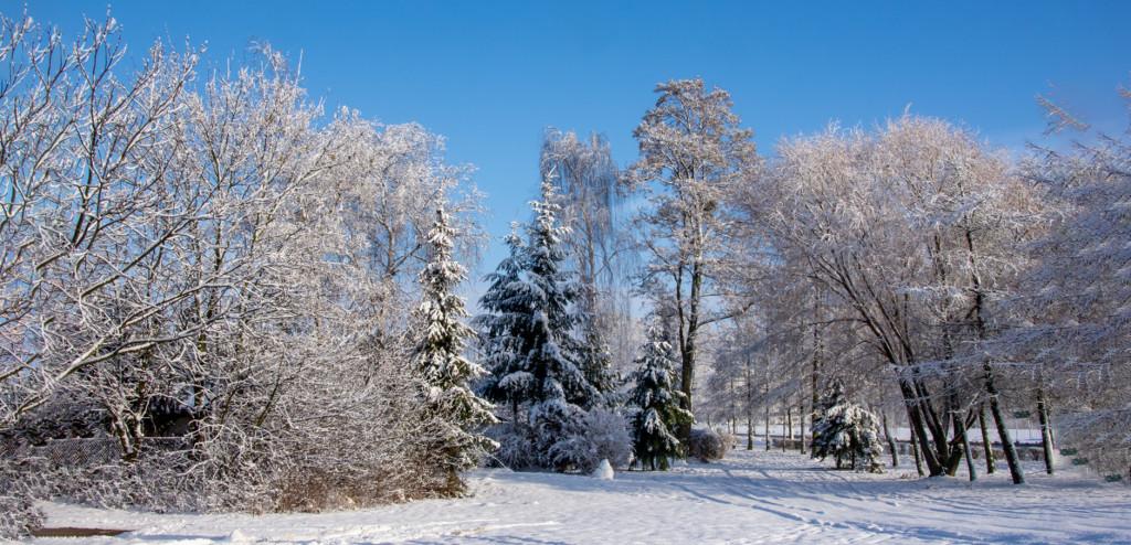 09 zima 2021 z 13.01.2021