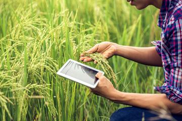 Rolnictwo maj 2021